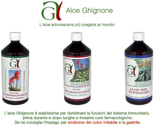Aloe Arborescens Ghignone